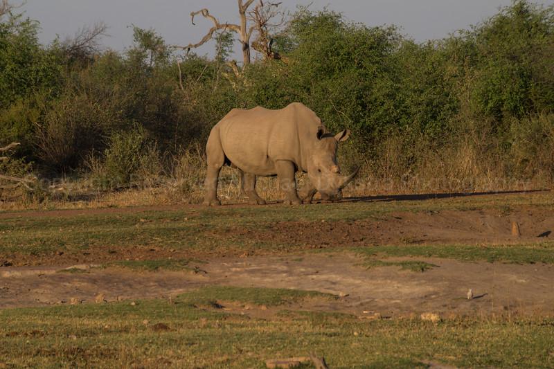 Madikwe-63.jpg
