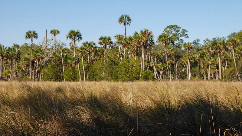 Savanna grasses with palms beyond