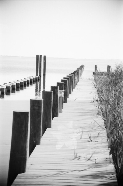Outer Banks Trees and Pier in Black and White