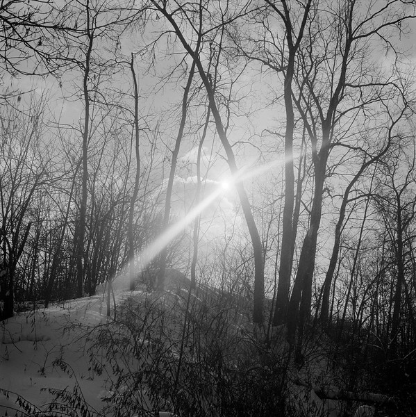 Sunlight and Woods behind Foreman Center, Fairport, NY. December 1980