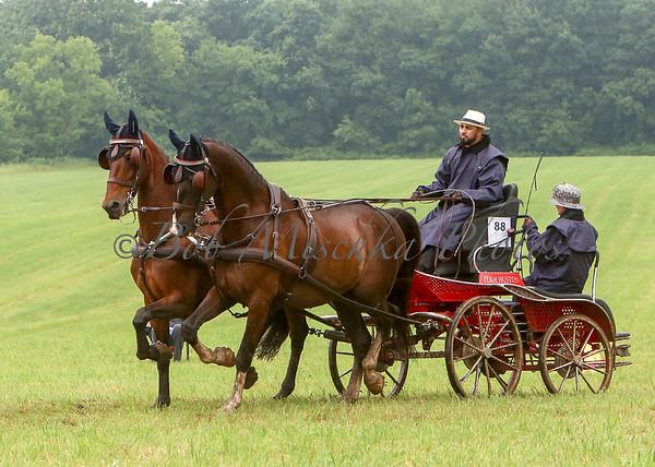 07/06/19 Notara Horse Driving Trial