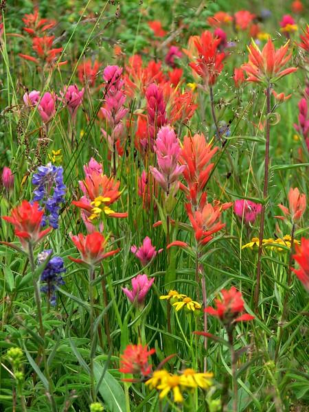 amh FLOWERS (1331).jpg