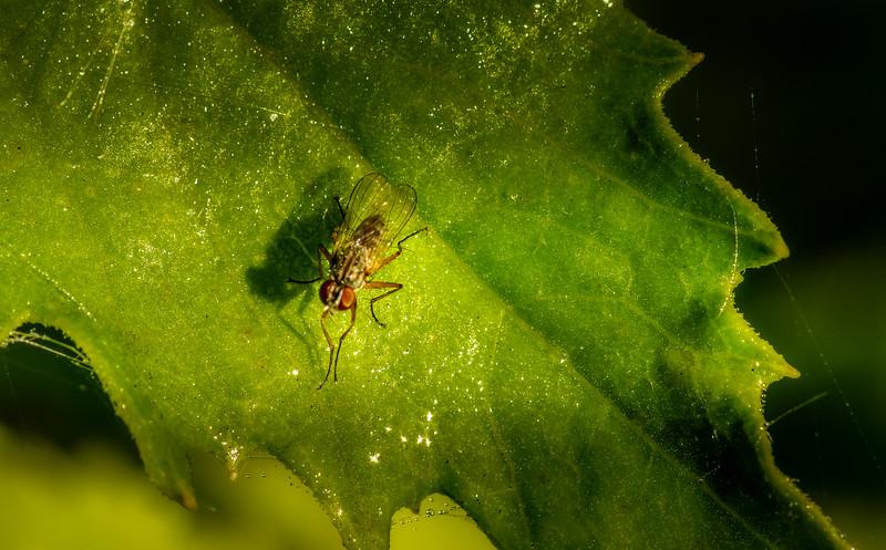 Bugs and Beetles - 55.jpg