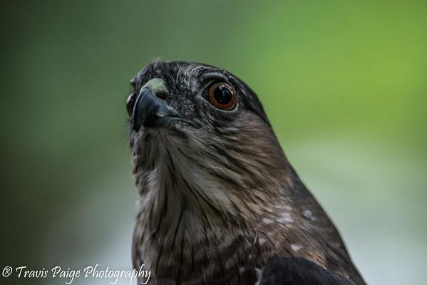 Animals of Squam Lakes Nature Center