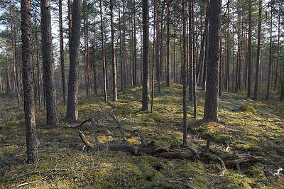 Eesti metsad