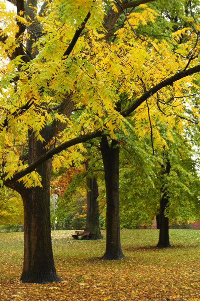 Trees in Queen's Park