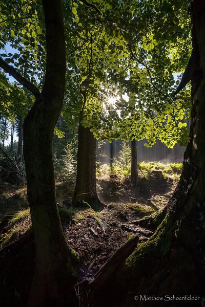 Sachsenwald Forest