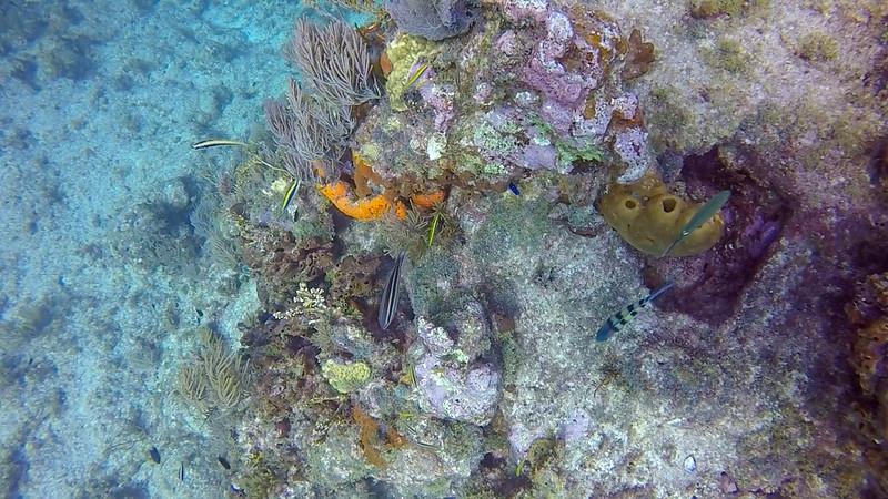 Ciesla-GOPR7580 - KC Fishes.jpg