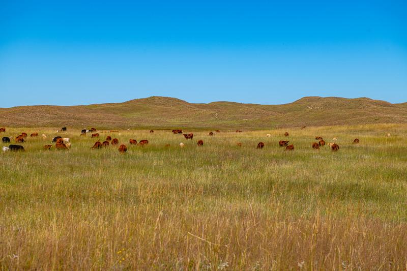 Horn Ranch-1741.jpg
