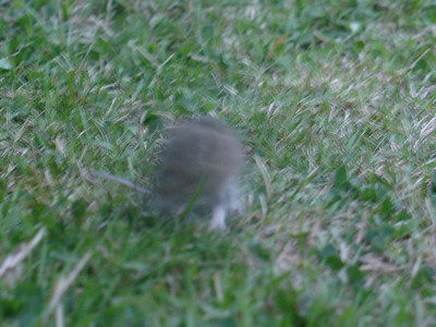 Non-Wrestling Pictures::Mice