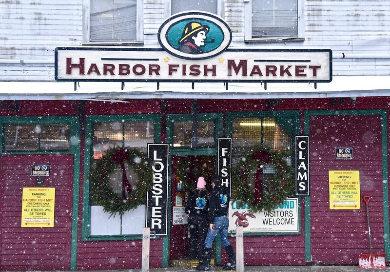 Harbor Fish Snow.jpg