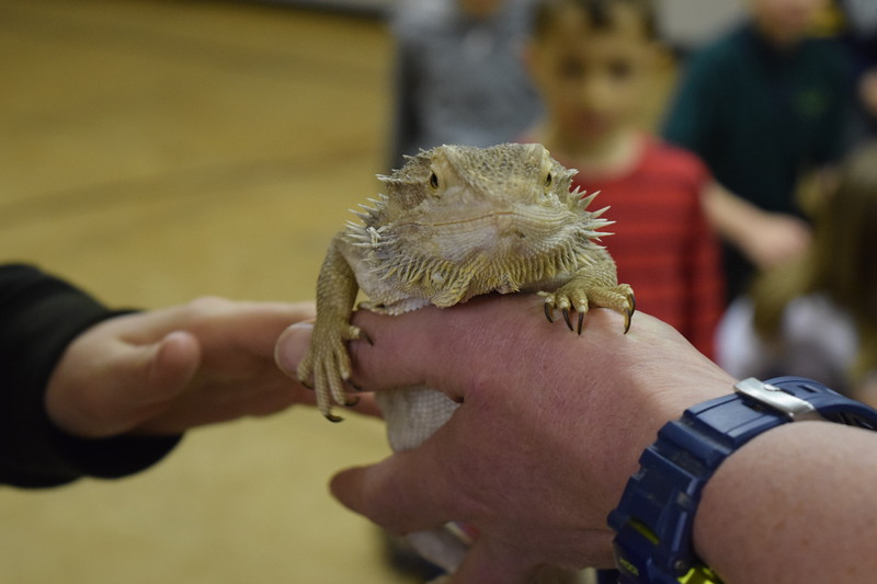 Cubs Reptile Day