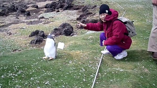 Antarctic video