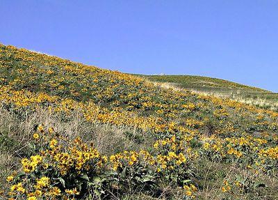 A Hillside near Osoyoos
