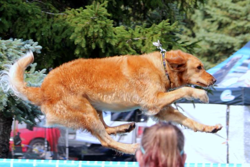Dock Dogs at Fair-123.JPG