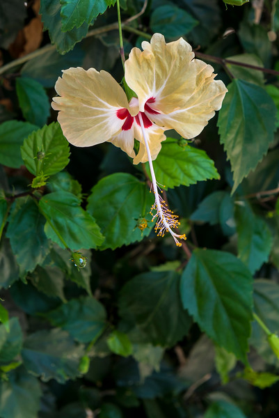 Local flower blooms everywhere