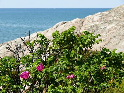 Sommar-kust