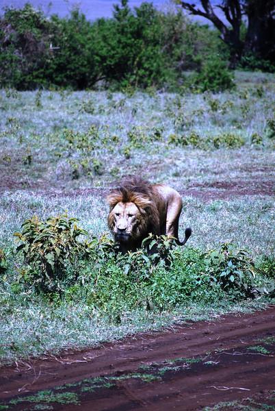 Ngorongoro (129).JPG