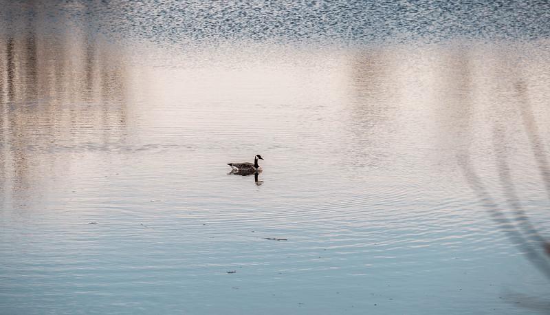2015-04-14_Sagecrest_Pond_23.jpg