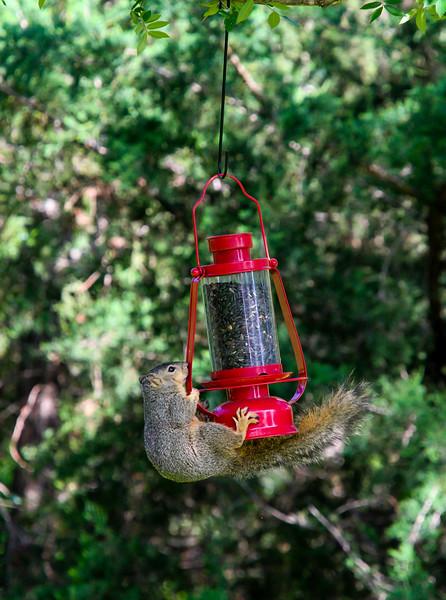 O'Rear Backyard Birds 2015
