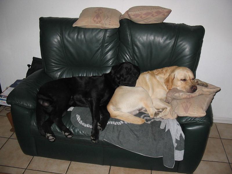 Paddy en Finnie augustus 2003