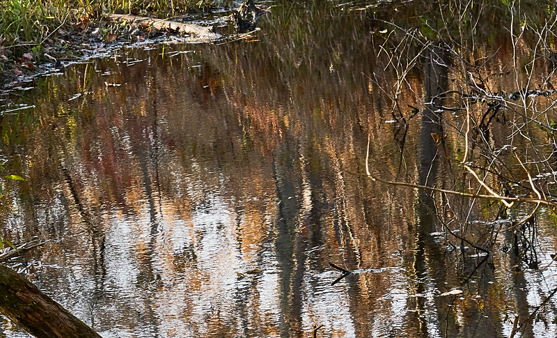 Reflections in Still Water