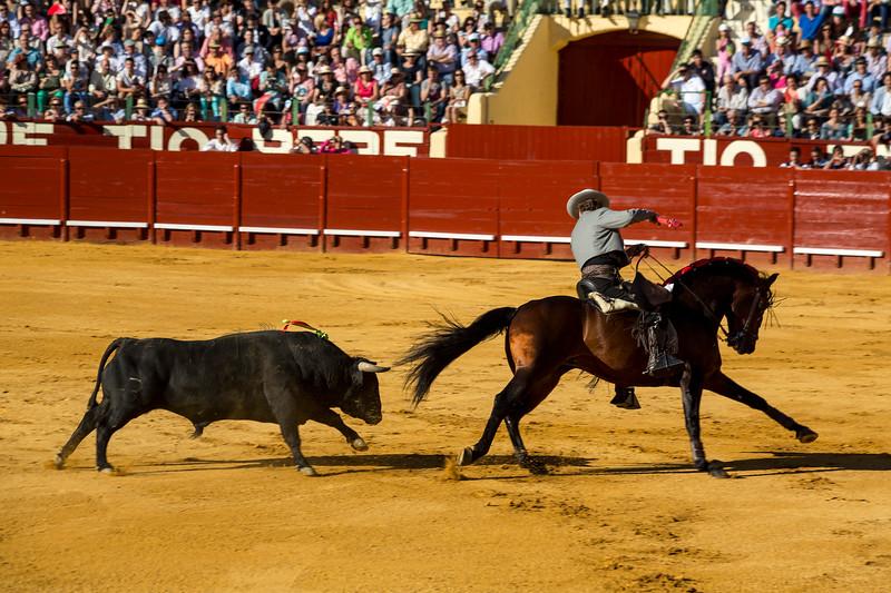 Bullfighting H2.jpg