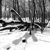 The North Woods _ bw