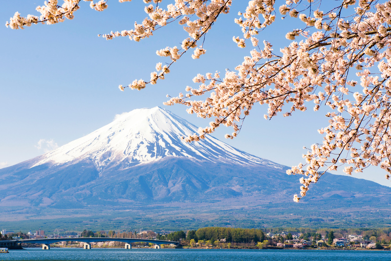 Fuji Mountain and Sakura branches