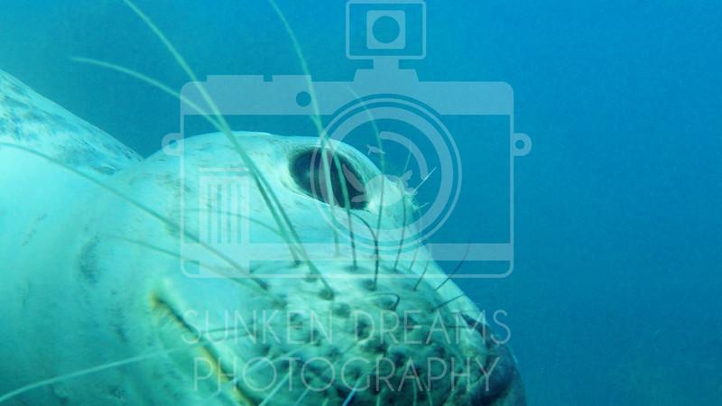 Lundy Island Edit.Still088.jpg