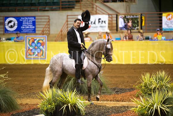 Fino Stallions 5&6yrs