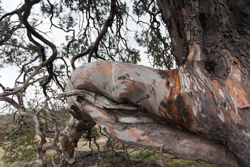 Tasmania_2015_081.jpg