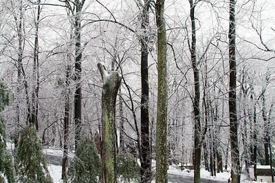 Ice Storm Feb 2014