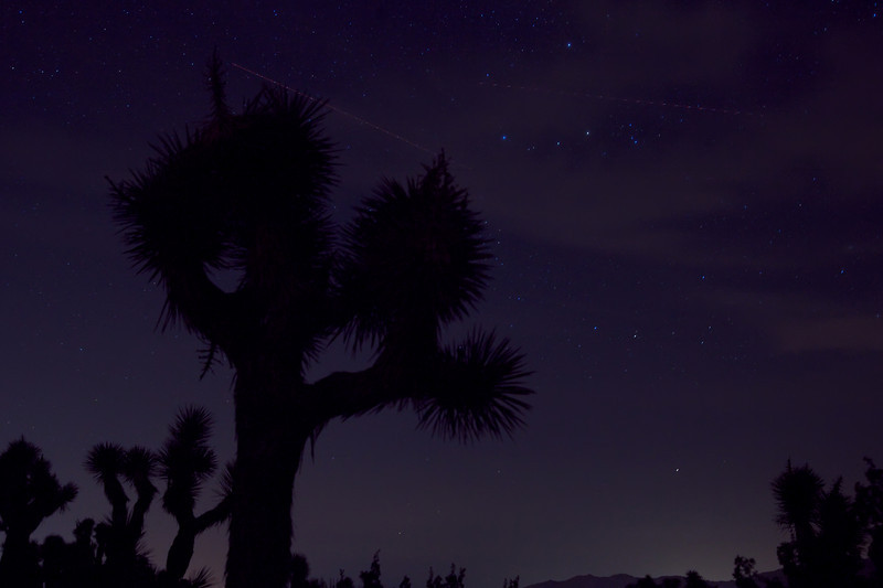A Night at Joshua Tree.jpg