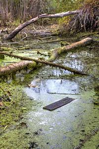 Idaho Has Swamp Land.