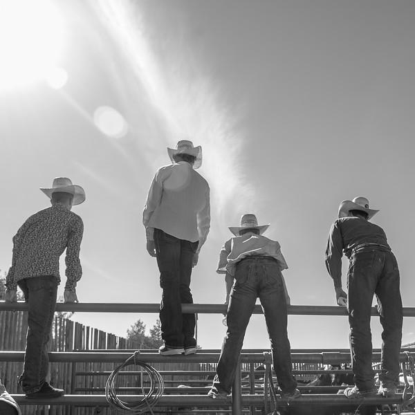 Rodeo_tests-001.jpg
