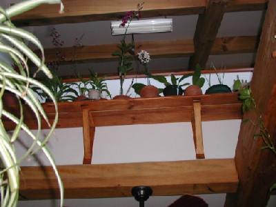140 Orchid Shelf_495_371_90.jpg