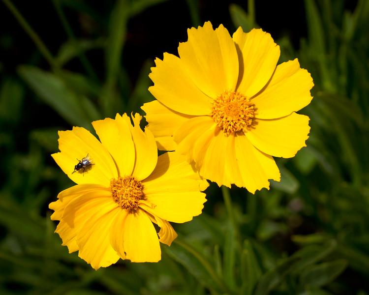 Fly Wildflowers