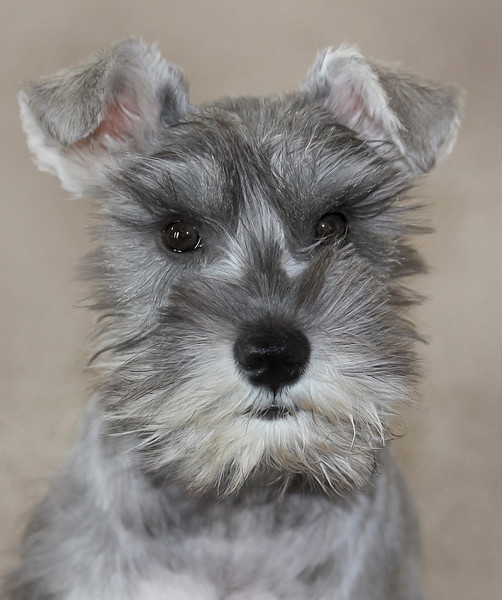 Sally  Round 329 - My Puppy - Mya copy.jpg