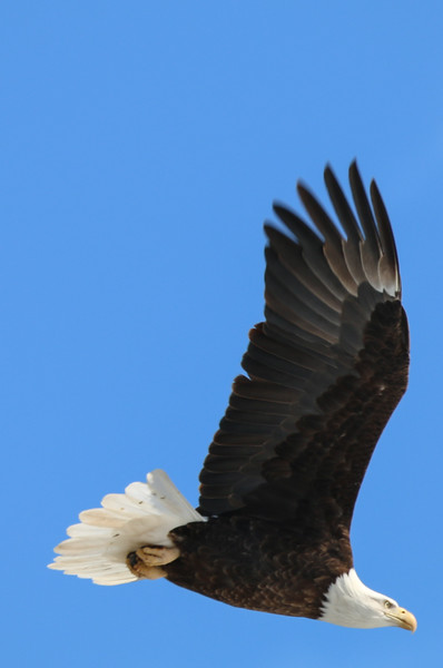 2-18-17 Eagle Final-48.jpg