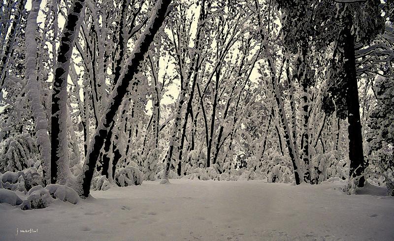 snow 2-28-2011.jpg