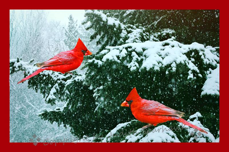 Snowy cardinals border fxt.jpg