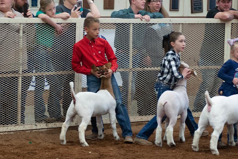 20190105_eosc_goats_showmanship-and-does433.jpg