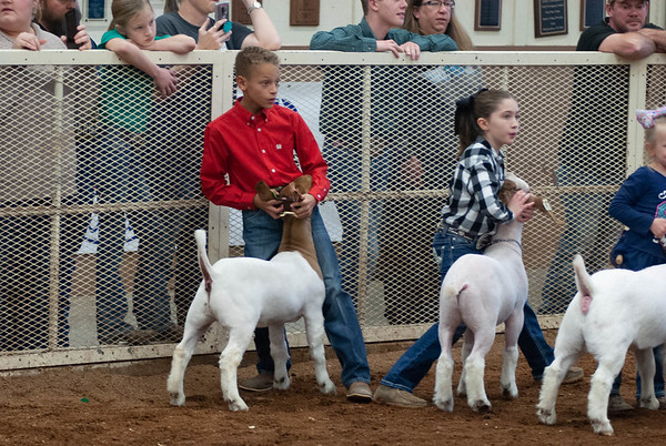 EOSC Goat Showmanship and Doe Show