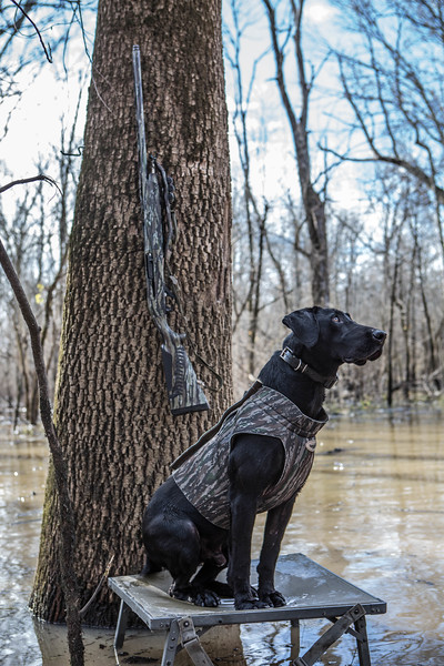 Mo on his dog stand staying dry in the flooded Arkansas timber.