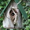 Active Bird House in Buffalo , NY