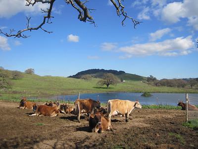 Chileno Valley Farm - February 2011