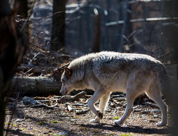 Wolf Preserve 2018-03-31