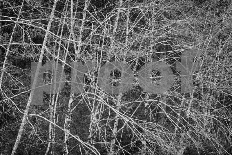 Skokomish, SF alder 7553_HDR.jpg