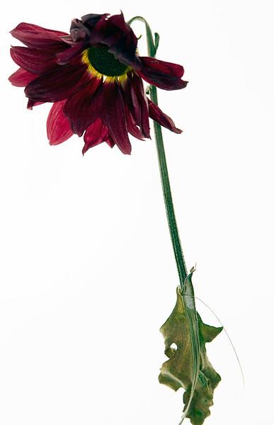 Flower_71I8595.jpg